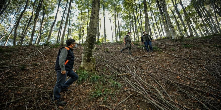 Bursa'daki Kayın Ormanı Tırtıl İstilasından Biyolojik Mücadele Sonucu Kurtarıldı