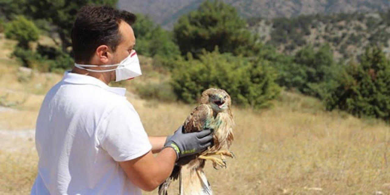 Bursa Hayvanat Bahçesi'nde Tedavisi Tamamlanan Şahin Doğaya Salındı