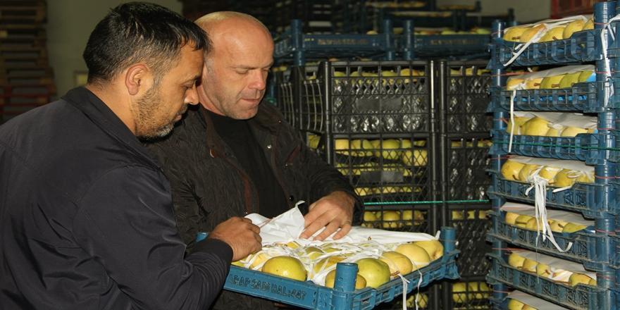 Bursa'da Meyve Üreticilerinin Yüzü İhracatla Güldü