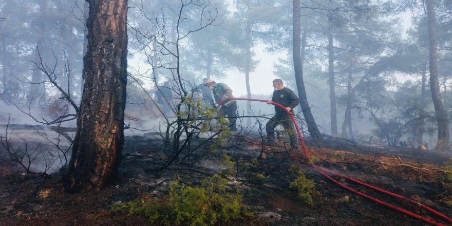 Bursa'da Ormanlık Alanda Örtü Yangını! Yangın Söndürüldü