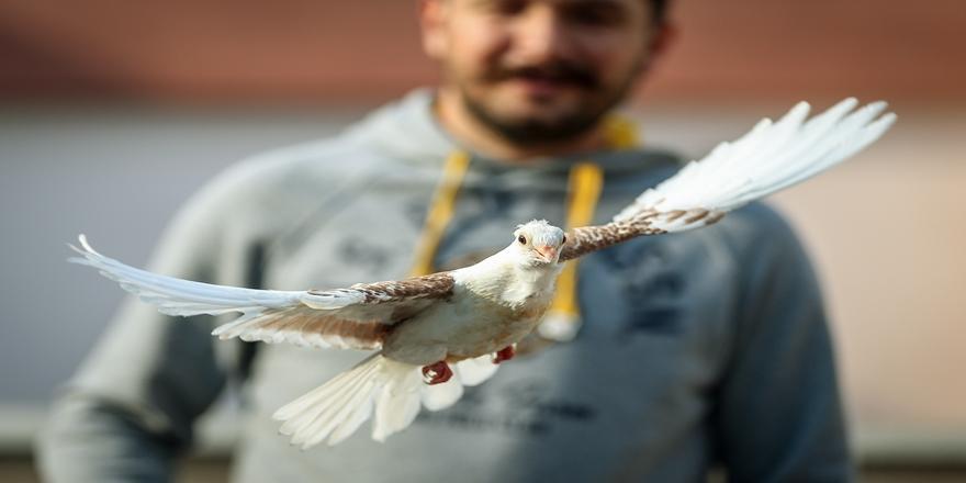 Karacabey'de Ölmek Üzereyken Kurtarılan 'Zibidi' Kanat Çırpmaya Başladı