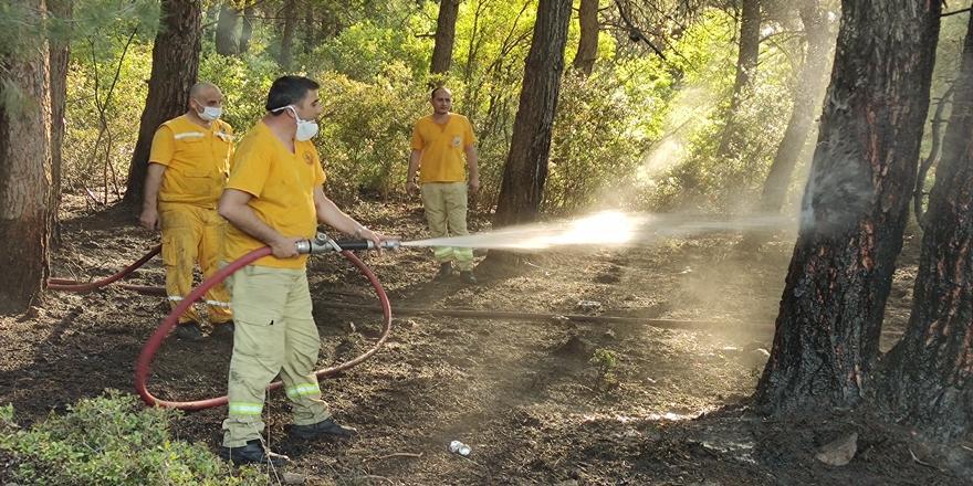 Kestel'de Orman Yangını! Ekipler Tarafından Söndürüldü