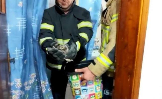 Bursa'da Baykuş Girdiği Evin Küvetinde Yavruladı