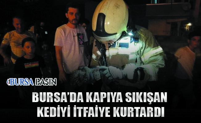 Bursa'nın İnegöl'de Kapıya Sıkışan Kediyi İtfaiye Kurtardı
