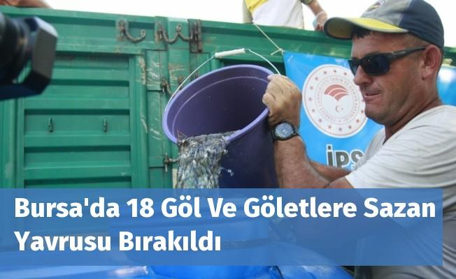 Bursa'da 18 Göl Ve Göletlere Sazan Yavrusu Bırakıldı