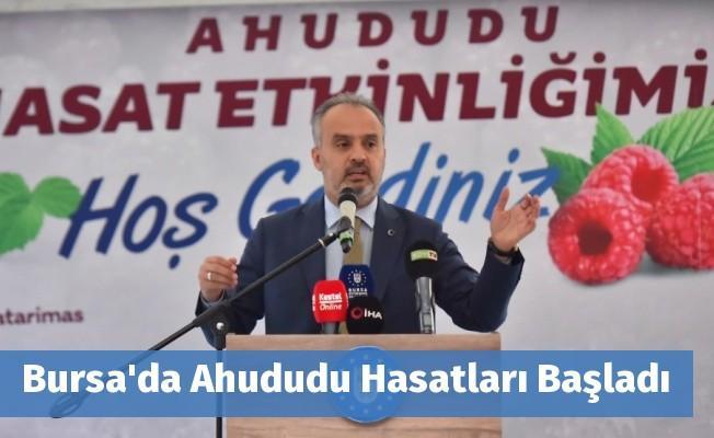 Bursa'da Ahududu Hasatları Başladı