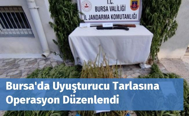 Bursa'da Uyuşturucu Tarlasına Operasyon Düzenlendi