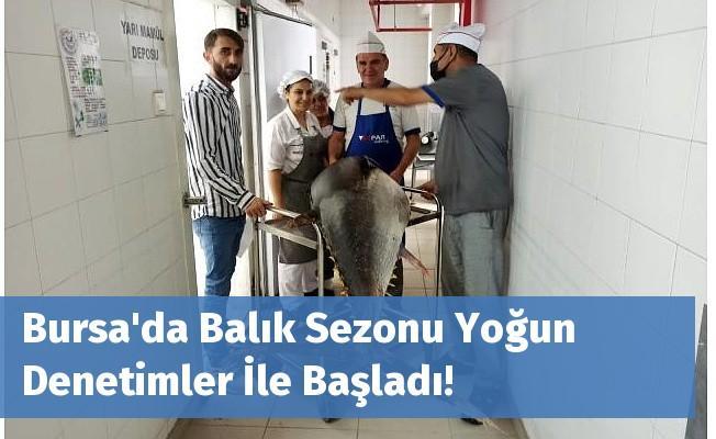 Bursa'da Balık Sezonu Yoğun Denetimler İle Başladı!