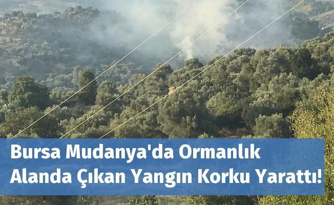 Bursa Mudanya'da Ormanlık Alanda Çıkan Yangın Korku Yarattı!
