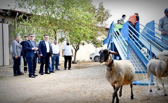 Bursa'nın Mustafakemalpaşa ilçesinde mobil koyun banyosu hizmete girdi