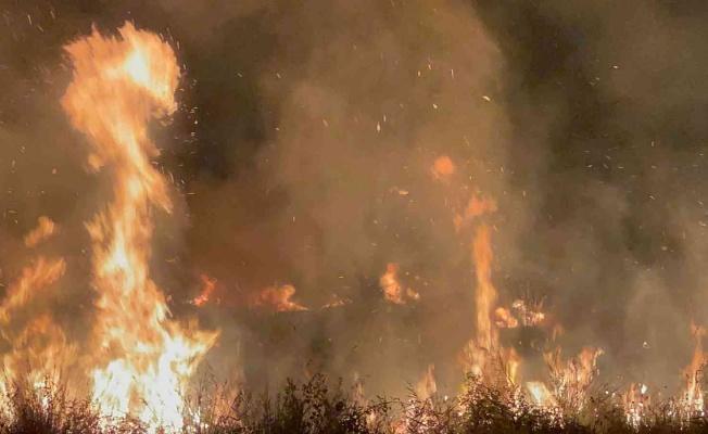 İznik Gölü Kıyısında Çıkan Yangın 20 Dönüm Araziyi Kül Etti