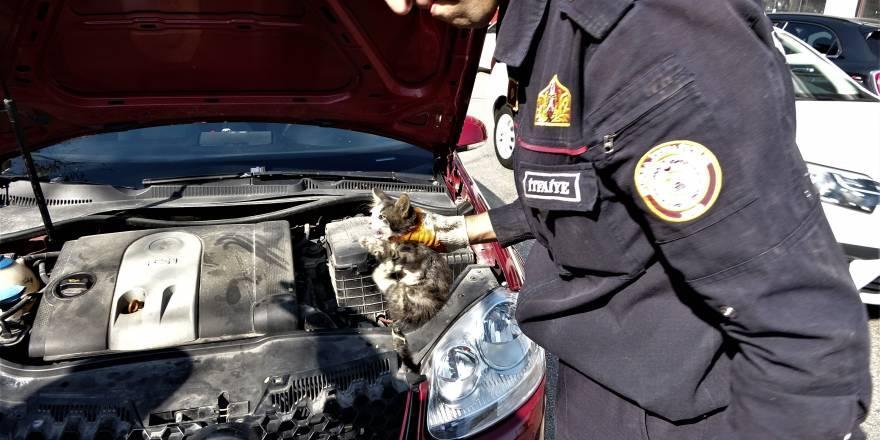 Bursa'da Yardım etmek için durduğu yaralı kedi aracın içine kaçtı